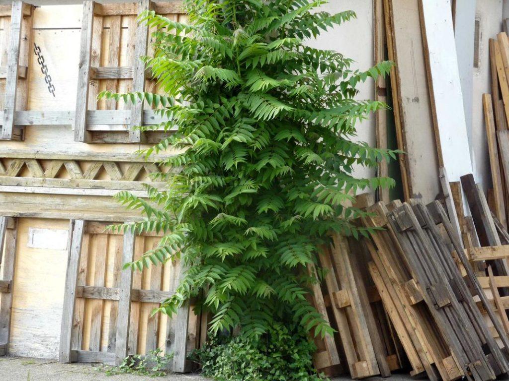 leftover wood pallets